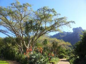 Succulant-garden